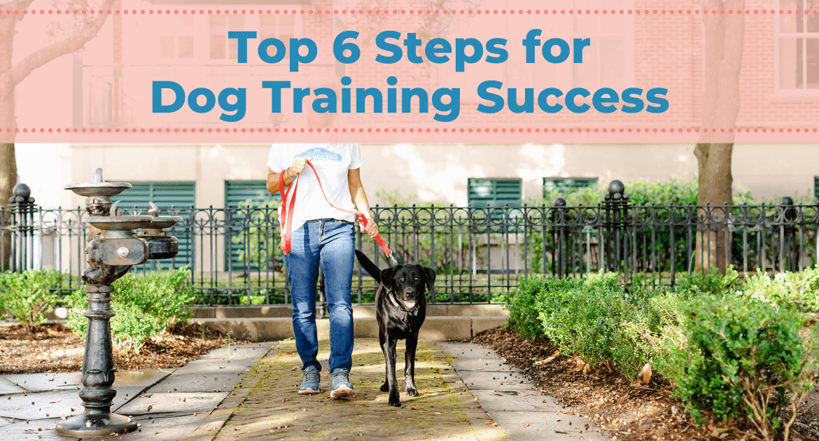 Top 6 Steps for Dog Training Success