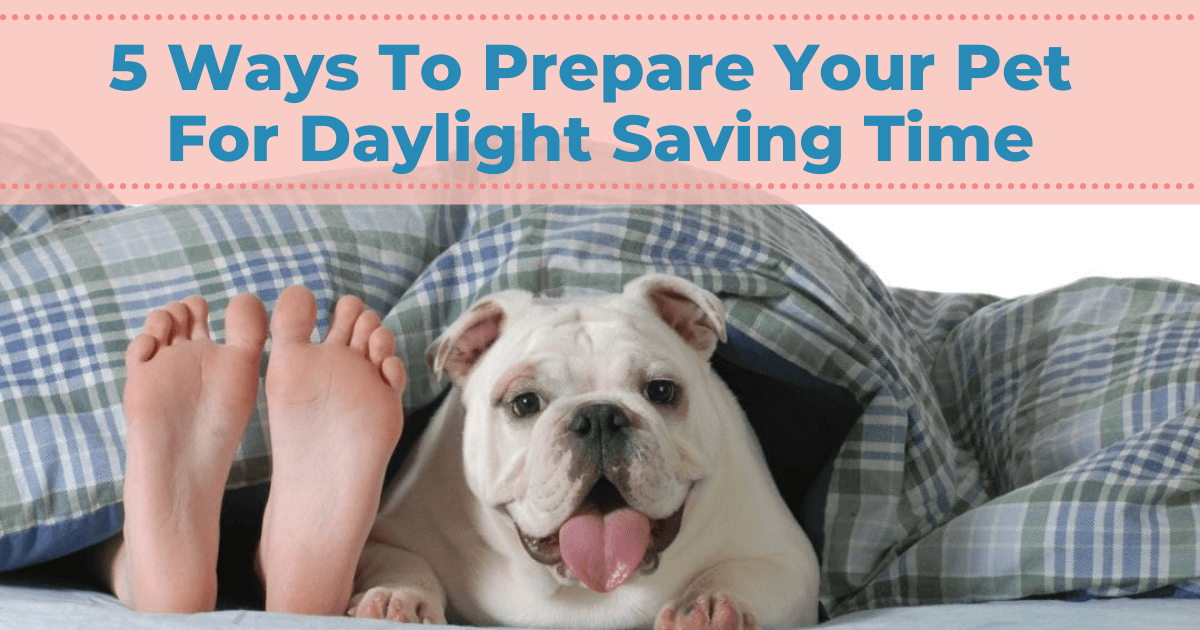 5 Ways To Prepare Your Pet For Daylight Saving Time
