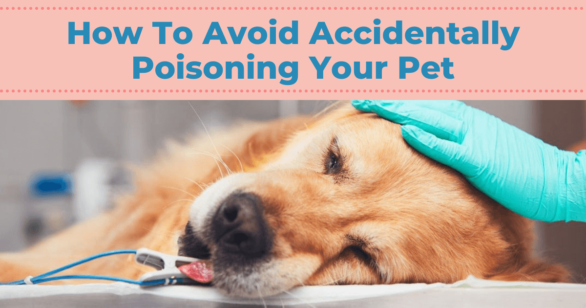 How To Avoid Accidentally Poisoning Your Pet