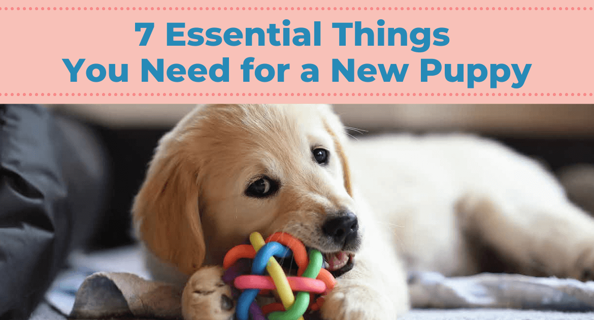 7 Essential Things You Need for a New Puppy