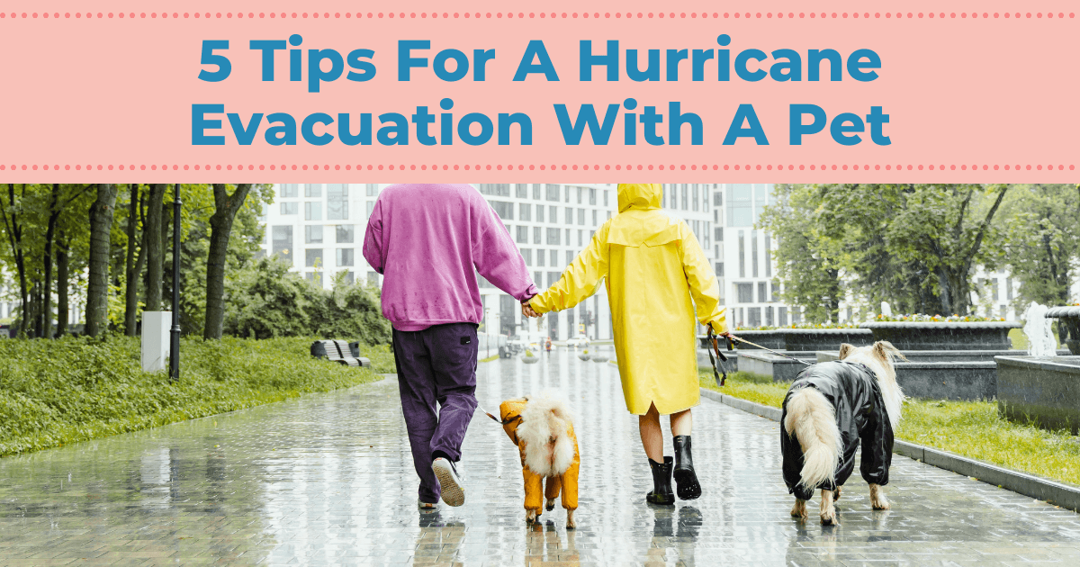 5 Tips For A Hurricane Evacuation With A Pet